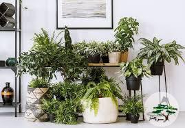 گیاهان آپارتمانی و استفاده آنها در محیط های سر بسته