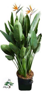 گیاه پرنده بهشتی