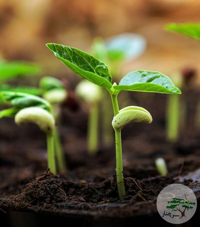 تکثیر گیاهان آپارتمانی