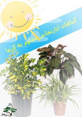 گیاهان آپارتمانی مقاوم به گرما