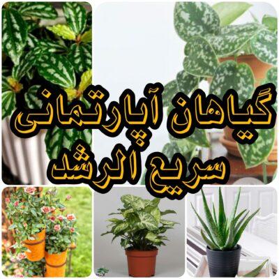 گیاهان آپارتمانی سریع الرشد