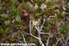 آشنایی با گیاه اکالیپتوس و نحوه نگهداری آن