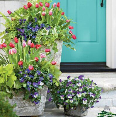 آشنایی با گیاهان مناسب جلوی درب خانه