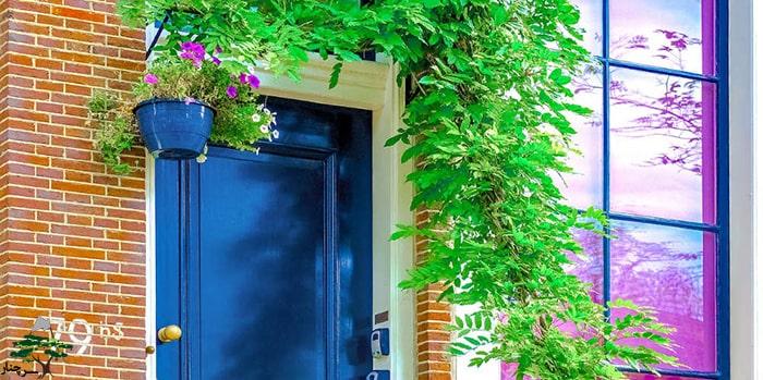 گیاهان مناسب جلوی درب خانه