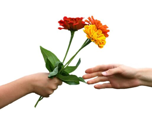 گل هدیه مناسب برای کادو دادن